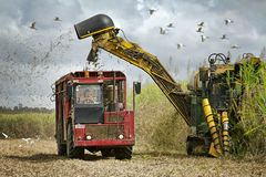 Australie de Sugar Cane Harvesting In North Queensland Image libre de droits