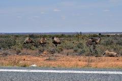 Australie, NSW, zoologie Images libres de droits
