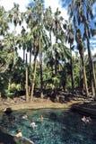Australie, territoire du nord, piscine thermique photographie stock libre de droits