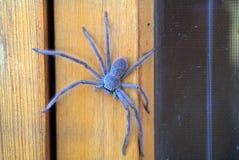 Australie, zoologie, Photo libre de droits