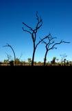 Australien buske Arkivbild