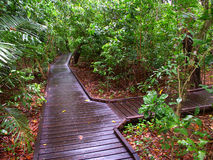 Australien grön önationalpark Arkivbilder