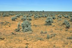 Australien, Hinterland, Vegetation Stockfoto