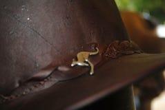 Australien känguruhatt Arkivbild