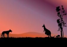 Australien kängurur vektor illustrationer
