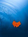 Australien kontinent ner under arkivbild