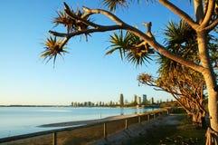Australien labrador southport Fotografering för Bildbyråer