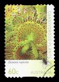 AUSTRALIEN - portostämpel royaltyfria foton