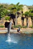 Australien-Seeweltdelphin-Ausführender stockbilder