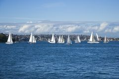Australien segelbåtar sydney arkivbild