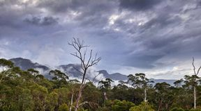 Australien skog i Grampiansen Arkivfoton