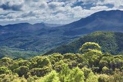 Australien skogregn Arkivfoto