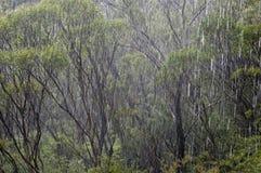 Australien skogregn Royaltyfria Bilder