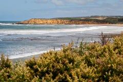 Australien strand torquay fotografering för bildbyråer