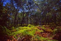 Australien/Tasmanien: Regen-Waldvegetation stockbilder
