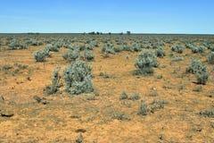 Australien vildmark, vegetation Arkivfoto