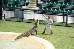 Australien-Zoo-Krokodil-Ausführender stockfotografie