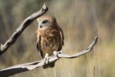 Australien, Zoologie Stockbild