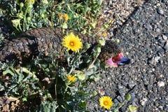 Australien, Zoologie, Reptil Lizenzfreie Stockfotos