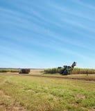 Australiensisk åkerbruk sugarcaneplockning royaltyfri bild