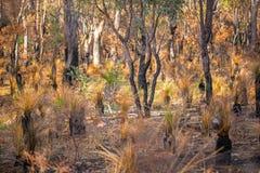 australiensisk buske royaltyfria bilder