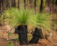 australiensisk buske royaltyfri fotografi
