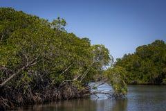 Australiensisk flod Fotografering för Bildbyråer