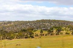 australiensisk liggande Arkivfoton