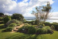 Australiensisk liggande för havssida Fotografering för Bildbyråer