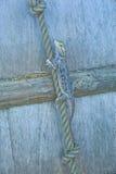 australiensisk skäggig drake Royaltyfri Foto