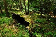australiensisk skog Arkivfoto