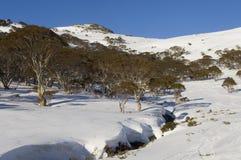 australiensisk snowscape royaltyfri bild