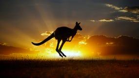 australiensisk solnedgång för känguru outback Arkivbilder