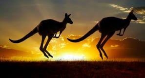 australiensisk solnedgång för känguru outback Arkivbild