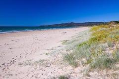 australiensisk strand Royaltyfria Foton