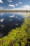 australiensiska billabongswampvåtmarker royaltyfria foton