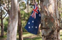 australiensiska flaggatrees Fotografering för Bildbyråer