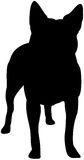 australiensiskt nötkreatur dog silhouetten Arkivbilder
