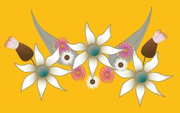 australier blommar infödingen Royaltyfri Foto