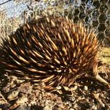 australier outback arkivfoton