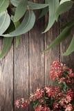 Australiern blommar sommarbakgrund Arkivfoto