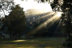 Australiern parkerar med solen som strålar till och med dimman royaltyfria bilder