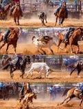Australijczyk Drużynowej łydki rodeo Roping kolaż obraz stock