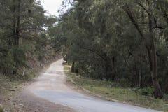 Australijczyk pieczętująca i odpieczętowana wiejska droga Obrazy Royalty Free