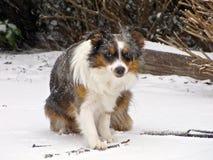 australijczyka bacy śnieg Fotografia Royalty Free