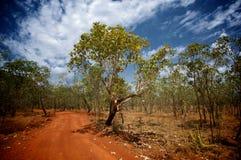 Australijczyka Bush scena zdjęcie stock