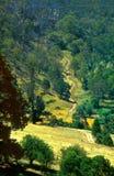 australijczyka krajobraz Zdjęcie Stock