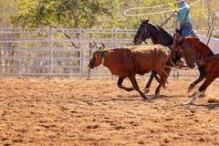 Australijczyka rodeo Drużynowy Łydkowy Roping wydarzenie obraz stock