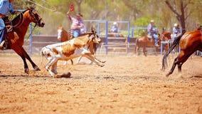 Australijczyka rodeo Drużynowy Łydkowy Roping wydarzenie obrazy royalty free