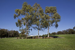 australijscy eukaliptusowi drzewa Fotografia Royalty Free